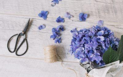 Nos conseils de jardinier pour mettre l'hortensia en pot